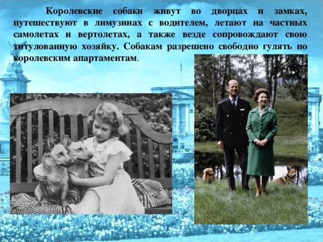 Королевские собаки живут во дворцах и замках, путешествуют в лимузинах с водителем, летают на частных самолетах и вертолетах, а также везде сопровождают свою титулованную хозяйку. Собакам разрешено свободно гулять по королевским апартаментам .