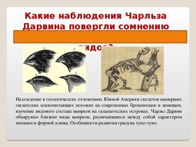 Какие наблюдения Чарльза Дарвина повергли сомнению его веру в неизменность видов? Наблюдения, сделанные Ч.Дарвином во время кругосветного путешествия. Нахождение в геологических отложениях Южной Америки скелетов вымерших гигантских млекопитающих похожих на современных броненосцев и ленивцев, изучение видового состава вьюрков на галапагосских островах. Чарльз Дарвин обнаружил близкие виды вьюрков, различающиеся между собой характером питания и формой клюва. Особенности развития грызуна туко-туко.