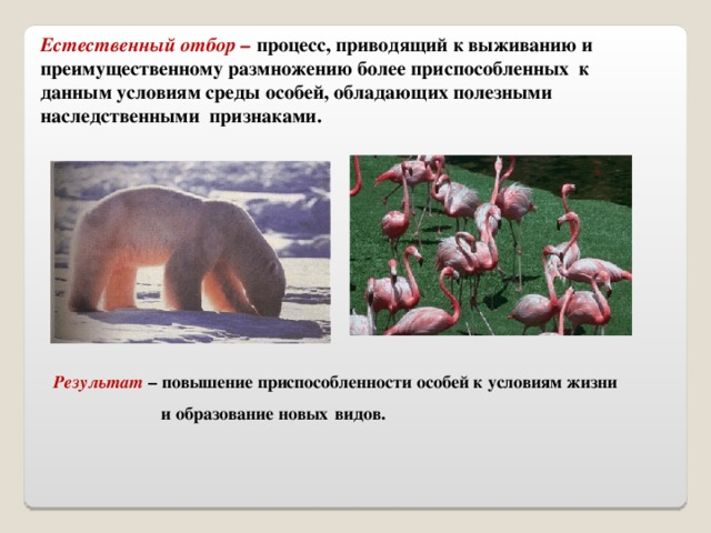 Естественный отбор – процесс, приводящий к выживанию и преимущественному размножению более приспособленных к данным условиям среды особей, обладающих полезными наследственными признаками. Результат – повышение приспособленности особей к условиям жизни  и образование новых  видов.