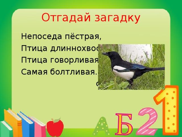 Отгадай загадку  Непоседа пёстрая,  Птица длиннохвостая,  Птица говорливая,  Самая болтливая.  сорока