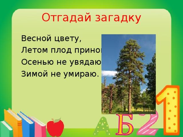 Отгадай загадку  Весной цвету,  Летом плод приношу,  Осенью не увядаю,  Зимой не умираю.  сосна