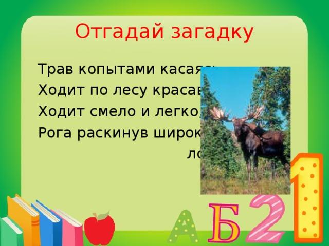 Отгадай загадку  Трав копытами касаясь,  Ходит по лесу красавец.  Ходит смело и легко,  Рога раскинув широко.  лось