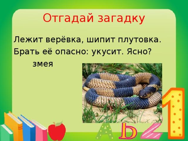 Отгадай загадку Лежит верёвка, шипит плутовка. Брать её опасно: укусит. Ясно?  змея