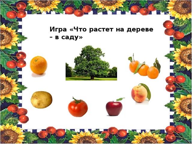 Игра «Что растет на дереве – в саду»