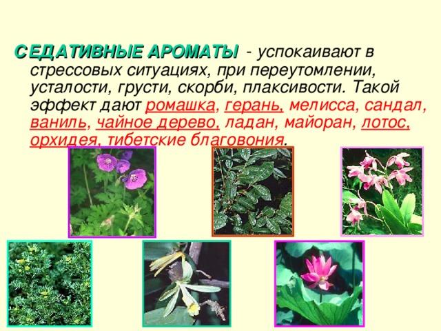 СЕДАТИВНЫЕ АРОМАТЫ - успокаивают в стрессовых ситуациях, при переутомлении, усталости, грусти, скорби, плаксивости. Такой эффект дают ромашка , герань, мелисса, сандал, ваниль , чайное дерево, ладан, майоран, лотос,  орхидея, тибетские благовония .