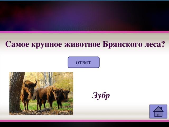 Самое крупное животное Брянского леса? ответ Зубр