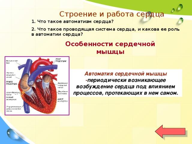 Строение и работа сердца 1. Что такое автоматизм сердца? 2. Что такое проводящая система сердца, и какова ее роль в автоматии сердца? Особенности сердечной мышцы Автоматия сердечной мышцы - периодически возникающее возбуждение сердца под влиянием процессов, протекающих в нем самом.