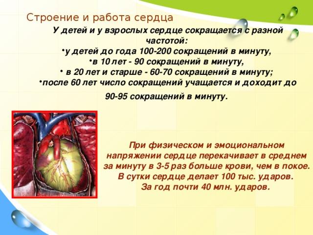 Строение и работа сердца У детей и у взрослых сердце сокращается с разной частотой: у детей до года 100-200 сокращений в минуту, в 10 лет - 90 сокращений в минуту,  в 20 лет и старше - 60-70 сокращений в минуту; после 60 лет число сокращений учащается и доходит до 90-95 сокращений в минуту.  При физическом и эмоциональном напряжении сердце перекачивает в среднем за минуту в 3-5 раз больше крови, чем в покое. В сутки сердце делает 100 тыс. ударов. За год почти 40 млн. ударов.