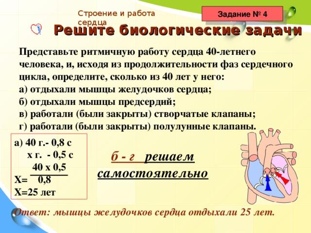 Строение и работа сердца Задание № 4 Решите биологические задачи Представьте ритмичную работу сердца 40-летнего человека, и, исходя из продолжительности фаз сердечного цикла, определите, сколько из 40 лет у него: а) отдыхали мышцы желудочков сердца; б) отдыхали мышцы предсердий; в) работали (были закрыты) створчатые клапаны; г) работали (были закрыты) полулунные клапаны. а) 40 г.- 0,8 с  х г. - 0,5 с  40 х 0,5 Х= 0,8 Х=25 лет б - г решаем  самостоятельно Ответ: мышцы желудочков сердца отдыхали 25 лет.