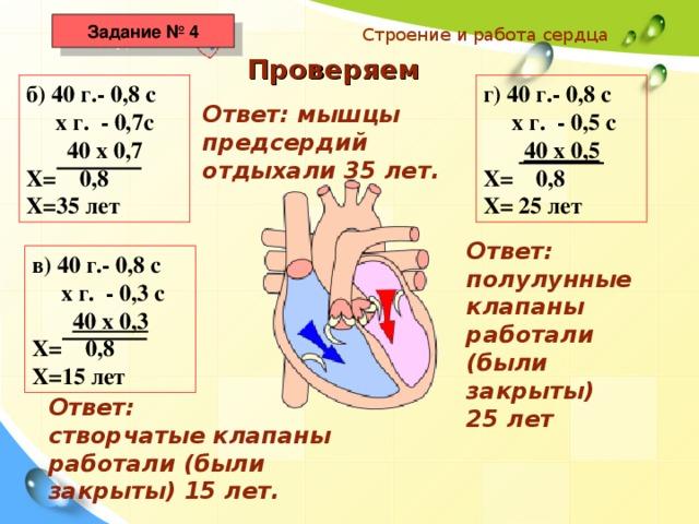 Задание № 4 Строение и работа сердца Проверяем б) 40 г.- 0,8 с  х г. - 0,7с  40 х 0,7 Х= 0,8 Х=35 лет г) 40 г.- 0,8 с  х г. - 0,5 с  40 х 0,5 Х= 0,8 Х= 25 лет Ответ: мышцы предсердий отдыхали 35 лет. Ответ: полулунные клапаны работали (были закрыты) 25 лет в) 40 г.- 0,8 с  х г. - 0,3 с  40 х 0,3 Х= 0,8 Х=15 лет Ответ: створчатые клапаны работали (были закрыты) 15 лет.