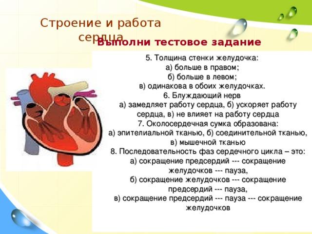 Строение и работа сердца  Выполни тестовое задание 5. Толщина стенки желудочка : а) больше в правом ; б) больше в левом; в) одинакова в обоих желудочках. 6. Блуждающий нерв  а) замедляет работу сердца, б) ускоряет работу сердца, в) не влияет на работу сердца  7. Околосердечная сумка образована:  а) эпителиальной тканью, б) соединительной тканью, в) мышечной тканью  8. Последовательность фаз сердечного цикла – это:  а) сокращение предсердий --- сокращение желудочков --- пауза,  б) сокращение желудочков --- сокращение предсердий --- пауза,  в) сокращение предсердий --- пауза --- сокращение желудочков