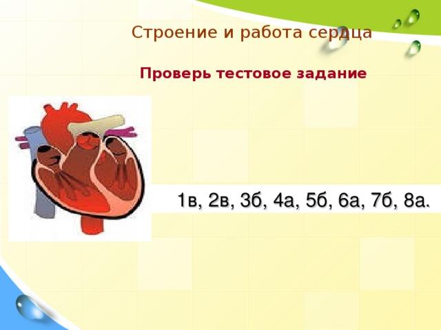 Строение и работа сердца  Проверь тестовое задание  1в, 2в, 3б, 4а, 5б, 6а, 7б, 8а.