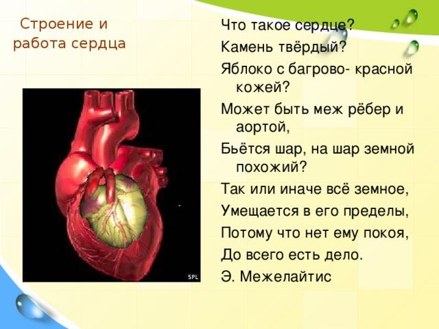 Строение и  работа сердца   Что такое сердце? Камень твёрдый? Яблоко с багрово- красной кожей? Может быть меж рёбер и аортой, Бьётся шар, на шар земной похожий? Так или иначе всё земное, Умещается в его пределы, Потому что нет ему покоя, До всего есть дело. Э. Межелайтис