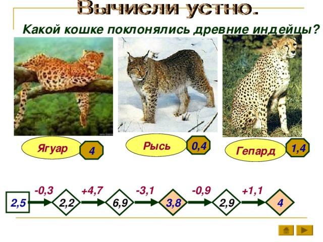 Какой кошке поклонялись древние индейцы? Рысь 0,4 Ягуар 1,4 Гепард 4 +1,1 +4,7 -3,1 -0,9 -0,3 6,9 3,8 4 2,9 2,2 2,5