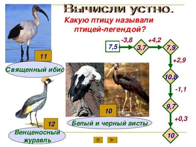 Какую птицу называли птицей-легендой? -3,8 +4,2 7,9 3,7 7,5 11 +2,9 Священный ибис 10,8 -1,1 9,7 10 +0,3 Белый и черный аисты 12 10 Венценосный журавль