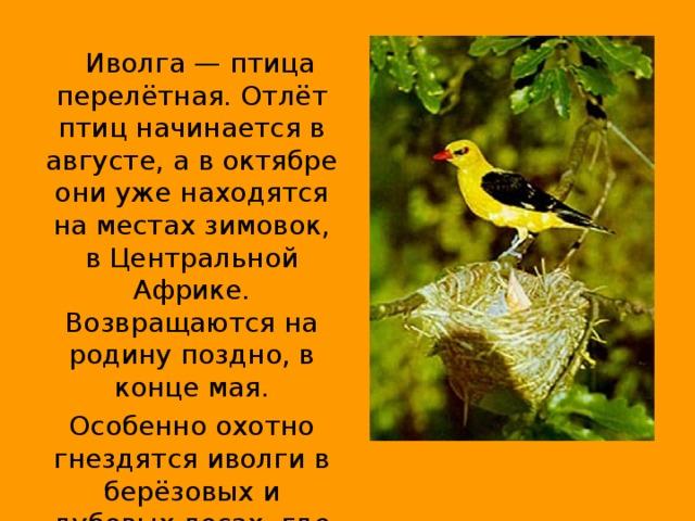 крайне птица иволга фото и описание этом парке