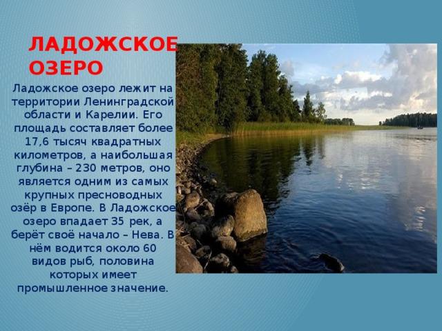 Ладожское озеро Ладожское озеро лежит на территории Ленинградской области и Карелии. Его площадь составляет более 17,6 тысяч квадратных километров, а наибольшая глубина – 230 метров, оно является одним из самых крупных пресноводных озёр в Европе. В Ладожское озеро впадает 35 рек, а берёт своё начало – Нева. В нём водится около 60 видов рыб, половина которых имеет промышленное значение.