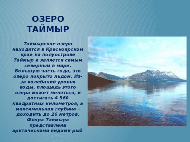 Озеро Таймыр Таймырское озеро находится в Красноярском крае на полуострове Таймыр и является самым северным в мире. Большую часть года, это озеро покрыто льдом. Из-за колебаний уровня воды, площадь этого озера может меняться, и достигать 4 560 квадратных километров, а максимальная глубина – доходить до 26 метров. Флора Таймыра представлена арктическими видами рыб .