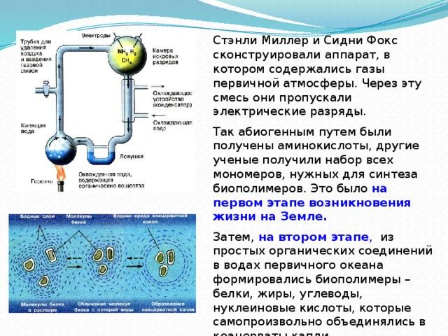 Стэнли Миллер и Сидни Фокс сконструировали аппарат, в котором содержались газы первичной атмосферы. Через эту смесь они пропускали электрические разряды. Так абиогенным путем были получены аминокислоты, другие ученые получили набор всех мономеров, нужных для синтеза биополимеров. Это было на первом этапе возникновения жизни на Земле. Затем, на втором этапе , из простых органических соединений в водах первичного океана формировались биополимеры – белки, жиры, углеводы, нуклеиновые кислоты, которые самопроизвольно объединялись в коацерваты капли.