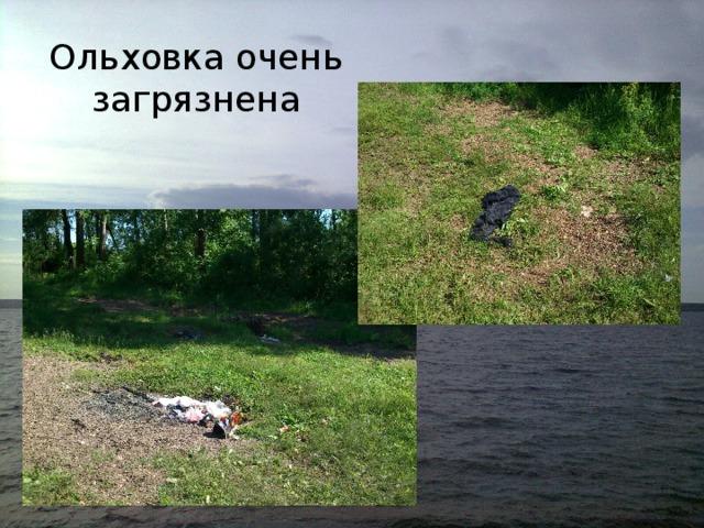 Ольховка очень загрязнена