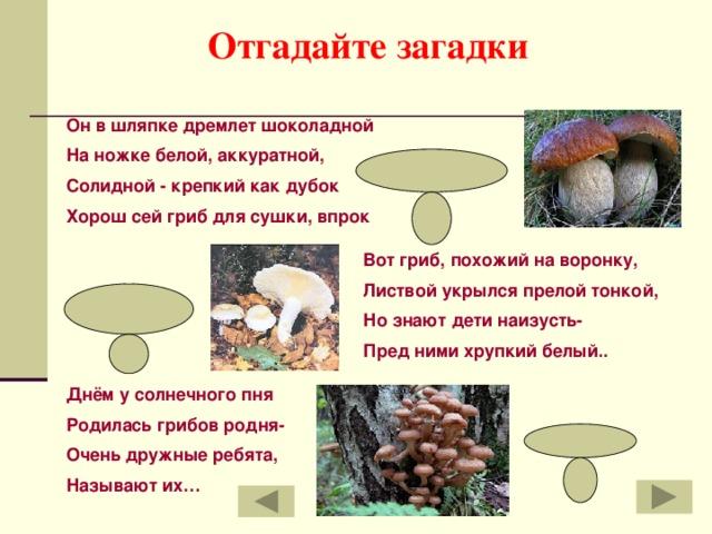 Отгадайте загадки Он в шляпке дремлет шоколадной На ножке белой, аккуратной, Солидной - крепкий как дубок Хорош сей гриб для сушки, впрок боровик Вот гриб, похожий на воронку, Листвой укрылся прелой тонкой, Но знают дети наизусть- Пред ними хрупкий белый.. груздь Днём у солнечного пня Родилась грибов родня- Очень дружные ребята, Называют их… опята