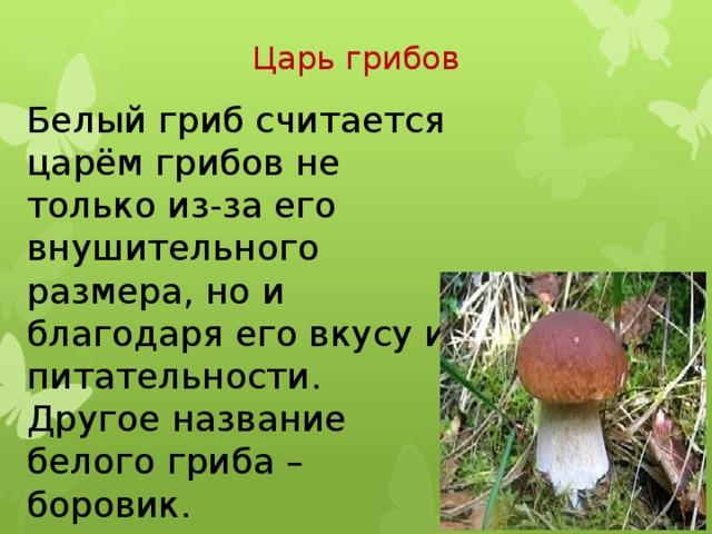 Царь грибов Белый гриб считается царём грибов не только из-за его внушительного размера, но и благодаря его вкусу и питательности. Другое название белого гриба – боровик.