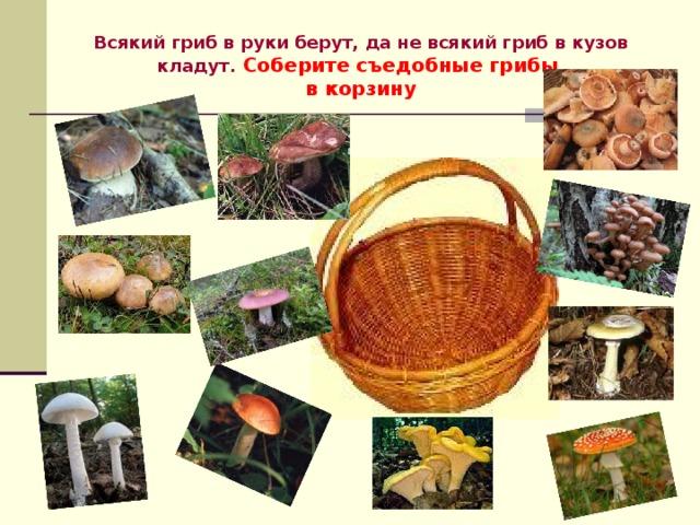 Всякий гриб в руки берут, да не всякий гриб в кузов кладут.  Соберите съедобные грибы  в корзину
