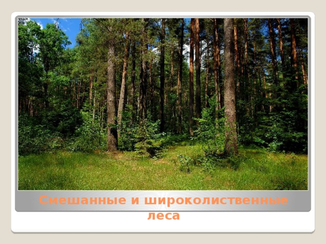 Смешанные и широколиственные леса