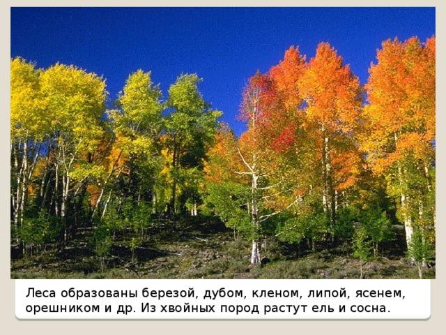 Леса образованы березой, дубом, кленом, липой, ясенем, орешником и др. Из хвойных пород растут ель и сосна.
