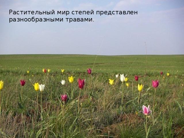 Растительный мир степей представлен разнообразными травами .