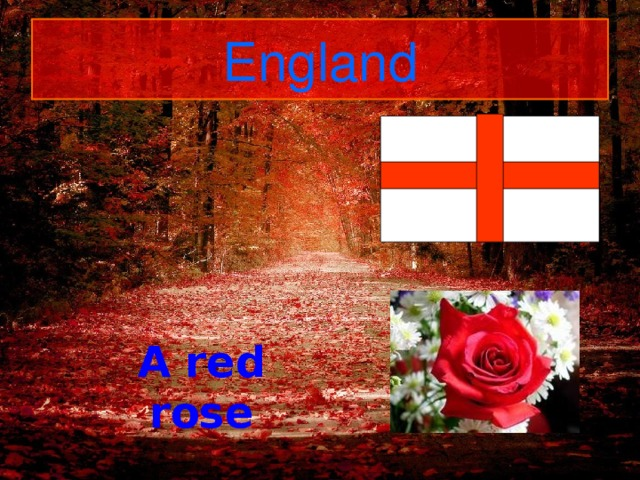 England A red rose