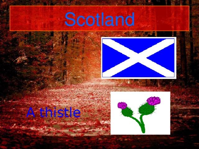 Scotland A thistle
