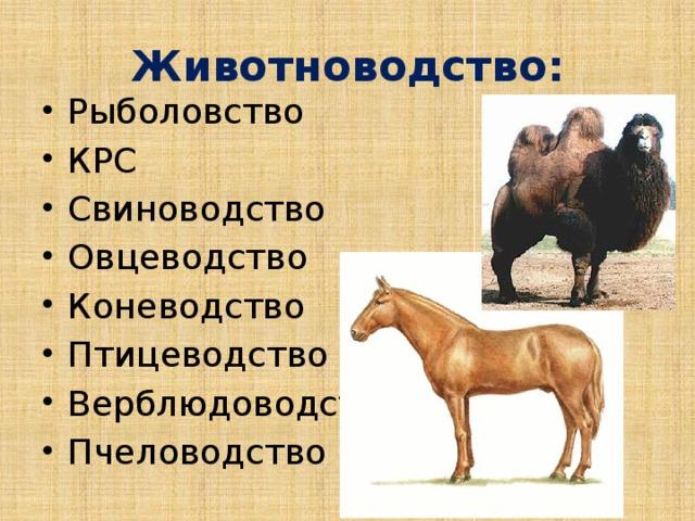 Животноводство: