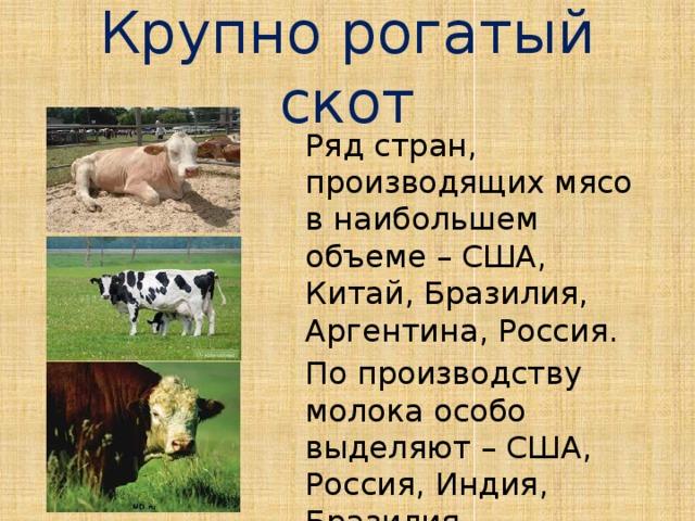 Крупно рогатый скот Ряд стран, производящих мясо в наибольшем объеме – США, Китай, Бразилия, Аргентина, Россия. По производству молока особо выделяют – США, Россия, Индия, Бразилия.