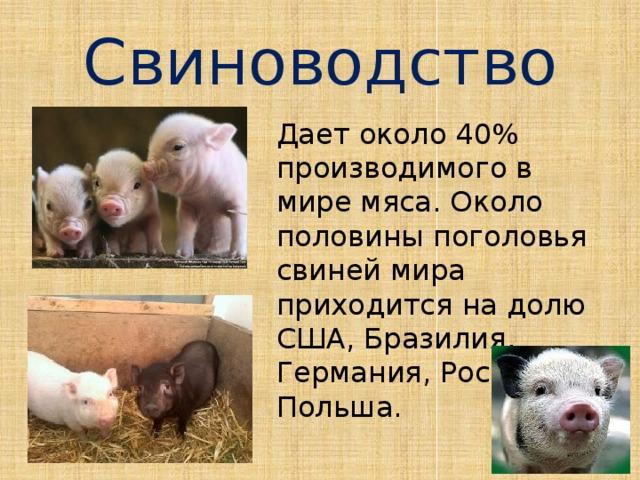 Свиноводство Дает около 40% производимого в мире мяса. Около половины поголовья свиней мира приходится на долю США, Бразилия, Германия, Россия, Польша.