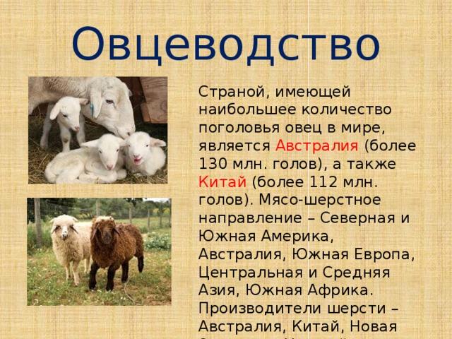 Овцеводство Страной, имеющей наибольшее количество поголовья овец в мире, является Австралия (более 130 млн. голов), а также Китай (более 112 млн. голов). Мясо-шерстное направление – Северная и Южная Америка, Австралия, Южная Европа, Центральная и Средняя Азия, Южная Африка. Производители шерсти – Австралия, Китай, Новая Зеландия, Уругвай и Россия.