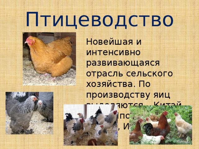 Птицеводство Новейшая и интенсивно развивающаяся отрасль сельского хозяйства. По производству яиц выделяются – Китай, США, Япония, Россия, Индия.
