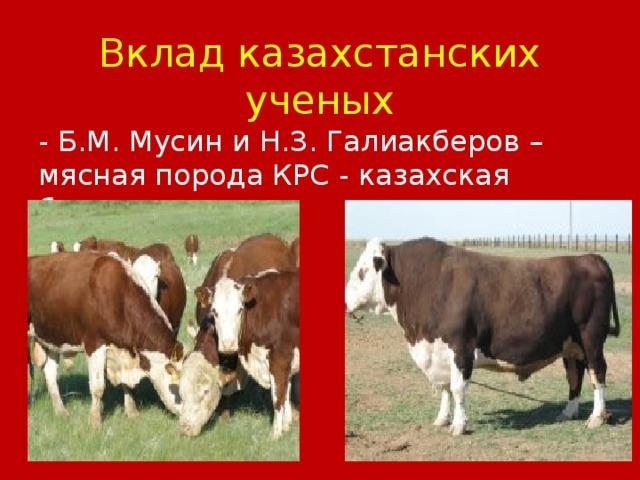 Вклад казахстанских ученых - Б.М. Мусин и Н.З. Галиакберов – мясная порода КРС - казахская белоголовая.