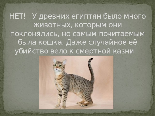 НЕТ! У древних египтян было много животных, которым они поклонялись, но самым почитаемым была кошка. Даже случайное её убийство вело к смертной казни