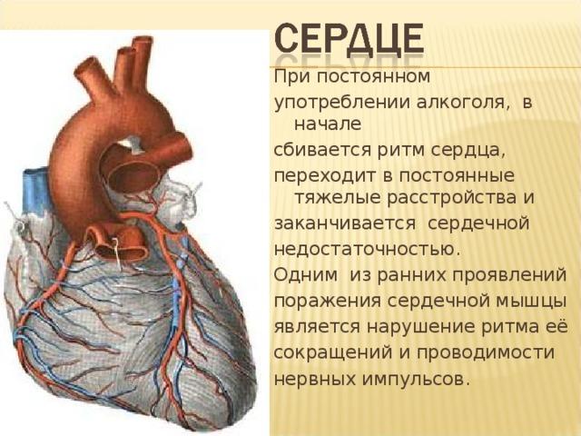 При постоянном употреблении алкоголя, в начале сбивается ритм сердца, переходит в постоянные тяжелые расстройства и заканчивается сердечной недостаточностью. Одним из ранних проявлений поражения сердечной мышцы является нарушение ритма её сокращений и проводимости нервных импульсов.
