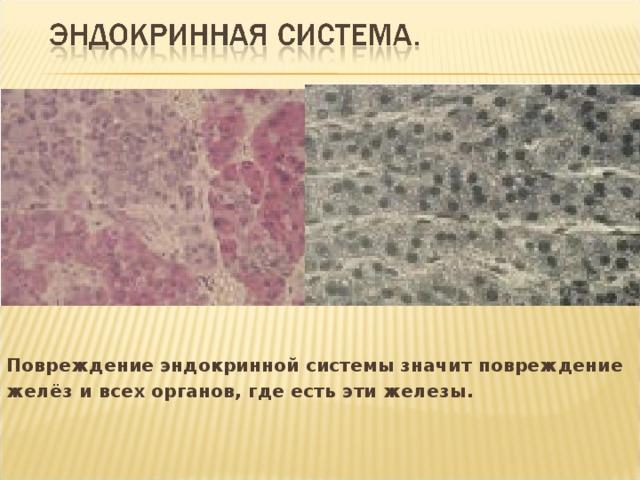Повреждение эндокринной системы значит повреждение желёз и всех органов, где есть эти железы.