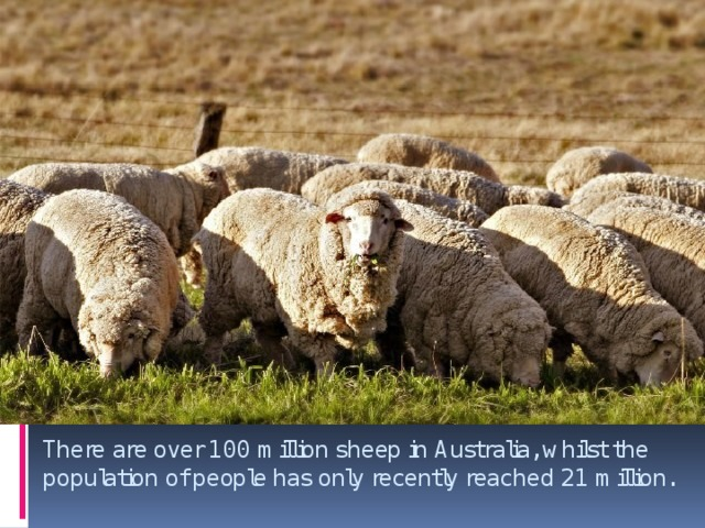There are over 100 million sheep in Australia, whilst the population of people has only recently reached 21 million.