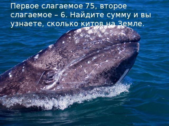 Делимое. Делитель Первое слагаемое 75, второе слагаемое – 6. Найдите сумму и вы узнаете, сколько китов на Земле.