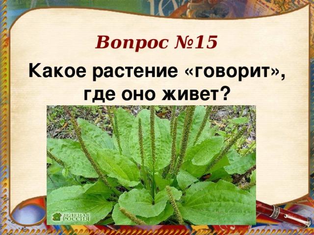 Вопрос №15 Какое растение «говорит», где оно живет?