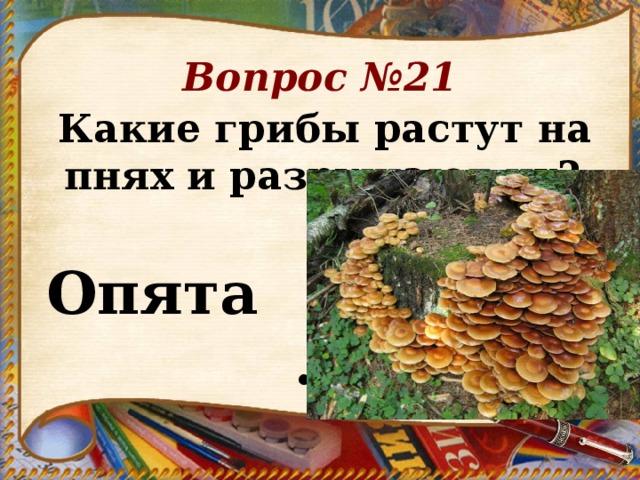 Вопрос №21 Какие грибы растут на пнях и разрушают их?     Опята .