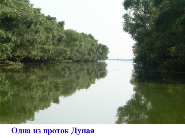 Одна из проток Дуная