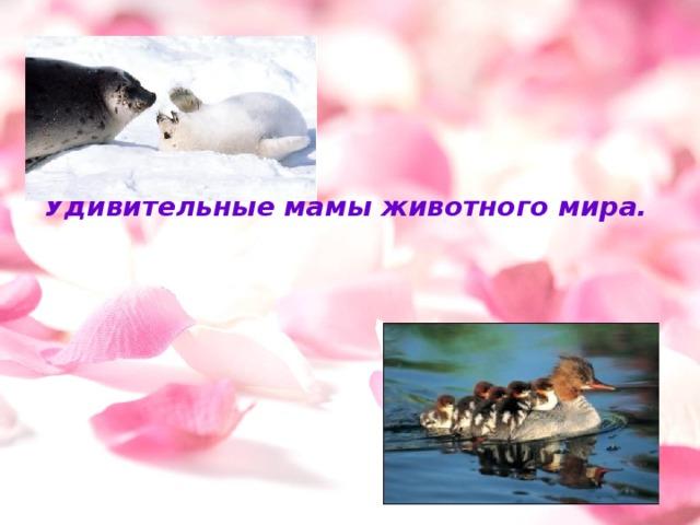 Удивительные мамы животного мира.