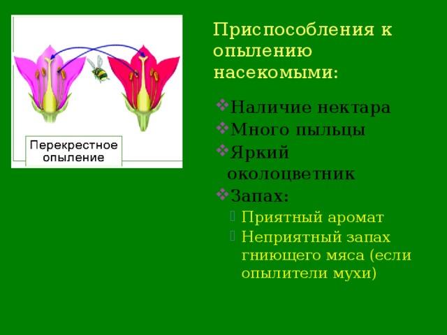 Приспособления к опылению насекомыми: