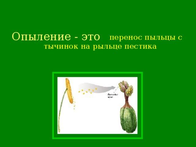 Опыление - это  перенос пыльцы с тычинок на рыльце пестика