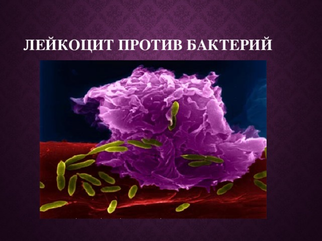 Лейкоцит против бактерий
